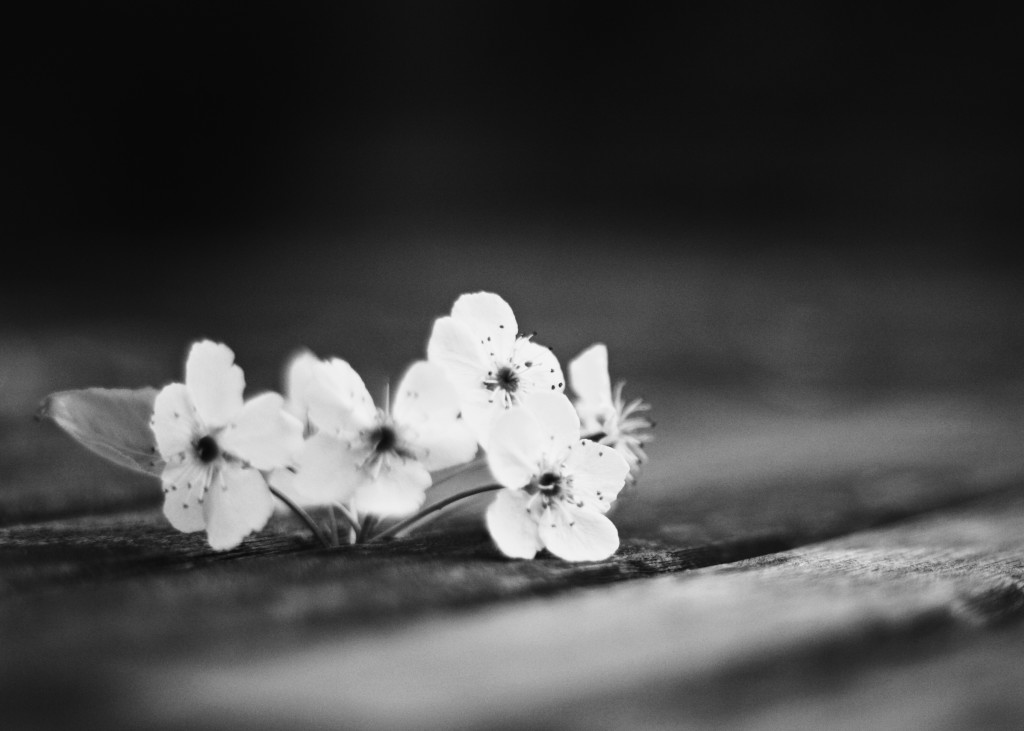 005 {Small} Blossoms